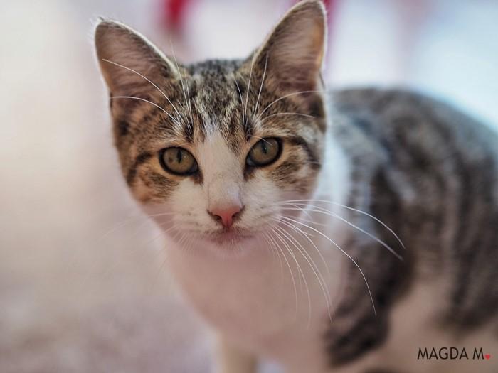 Mój kot – mój towarzysz. Jak dbać o kota, by żył z nami długo i w dobrym zdrowiu