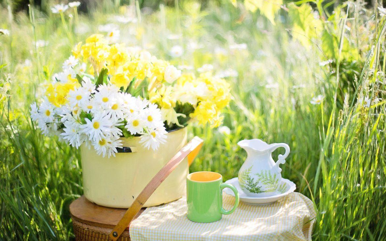 zielona herbata z cytryna
